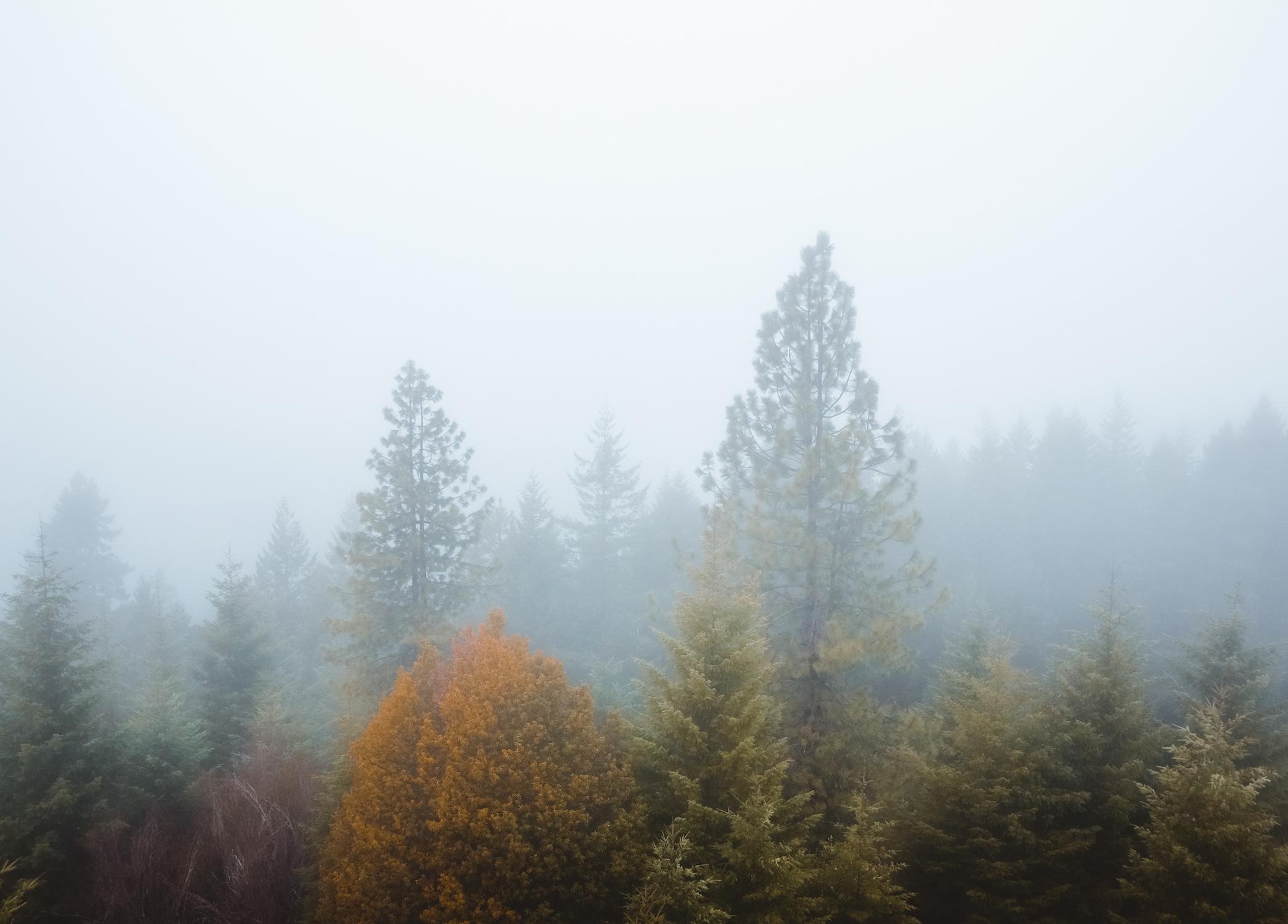 Pickett Butte Oregon