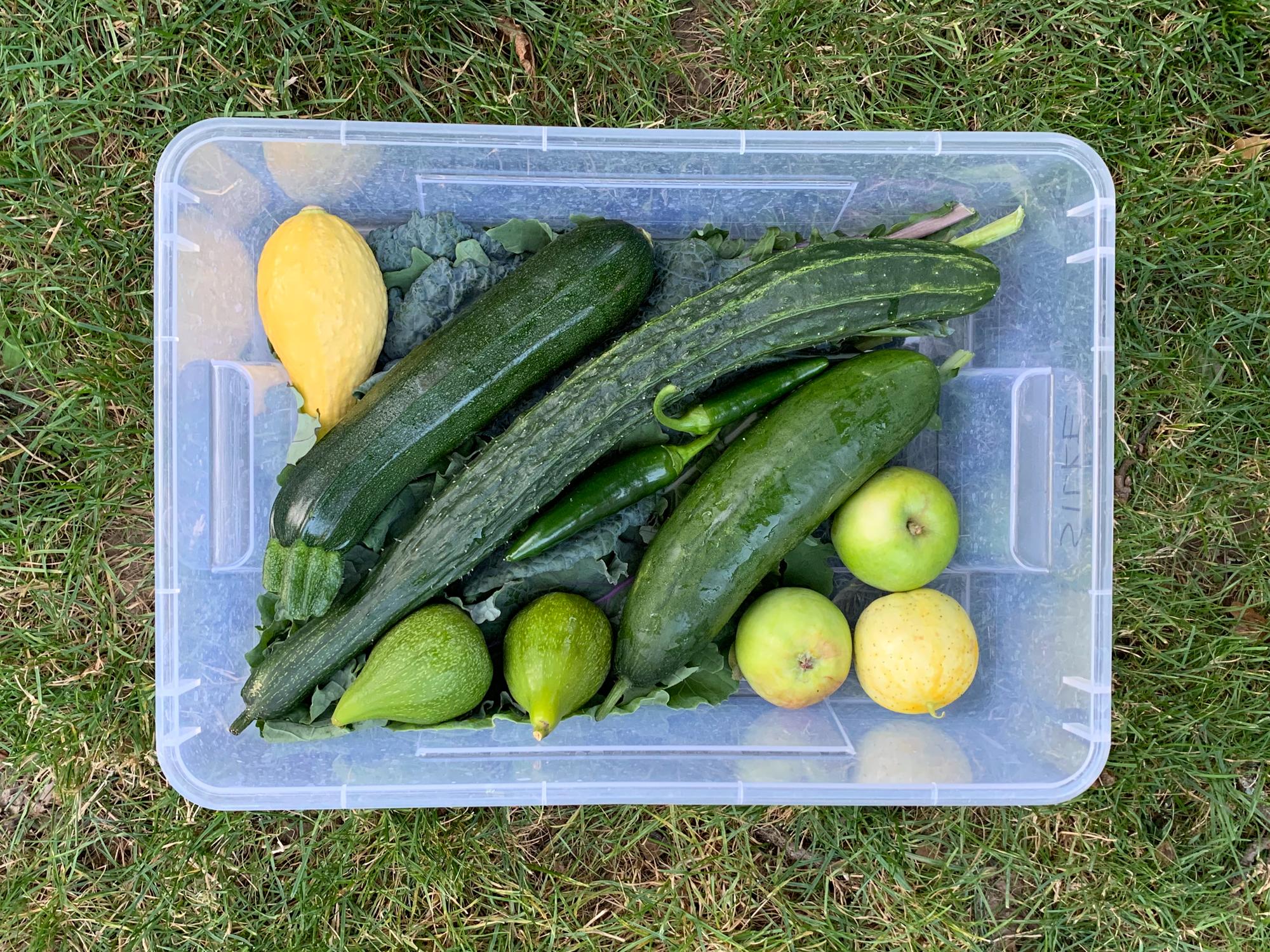 Amity Gardens CSA box